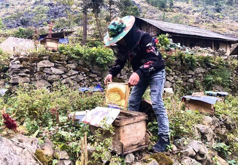Mật ong bạc hà cao nguyên đá Đồng Văn